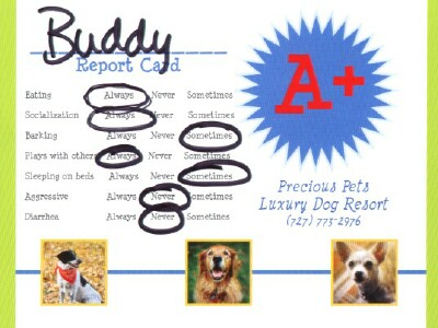 Precious Pets Luxury Dog Resort Boarding